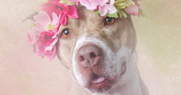 These Flowery Pit Bull Portraits Will Change The Way You Think About The Breed